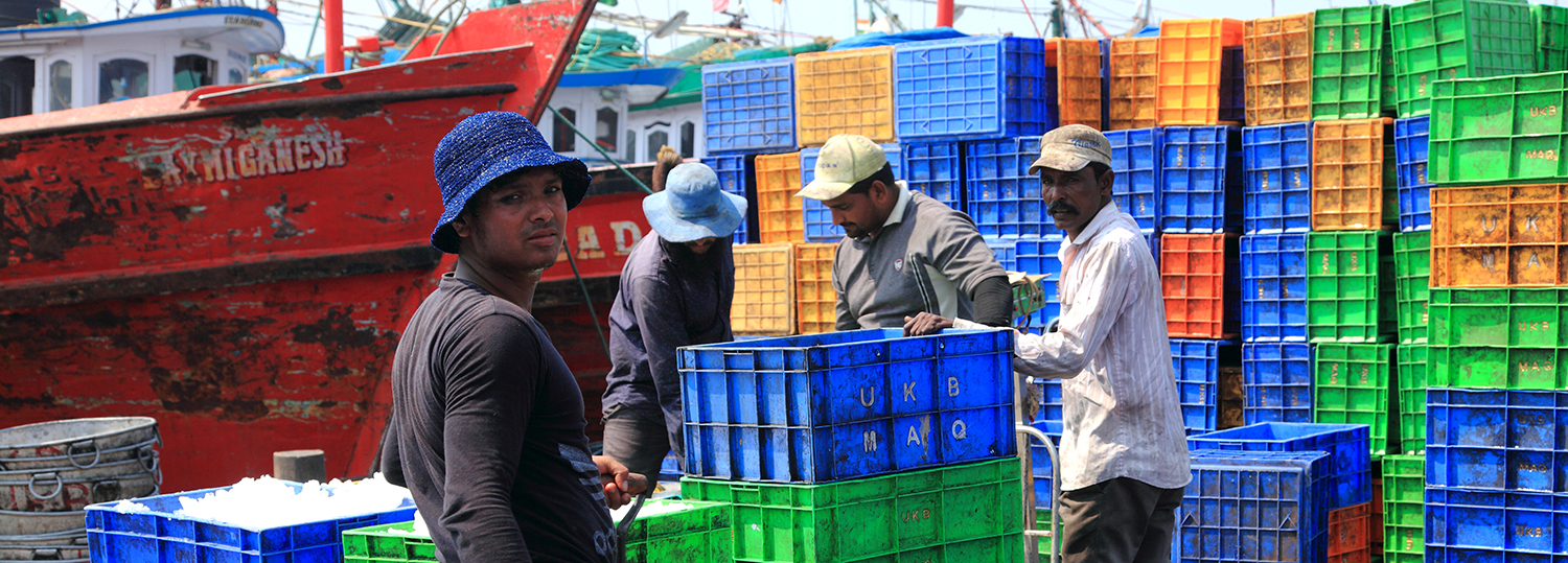 laborers collect the fish from the fishing boats to crates in the old fishing harbour